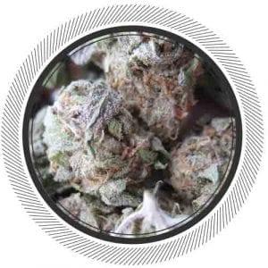 WhitePalm-Cannabis-NWCanaCoProductWhitePalm-Hybrid-Kootenay-Fresh-Cannabis-Granddaddy Purple