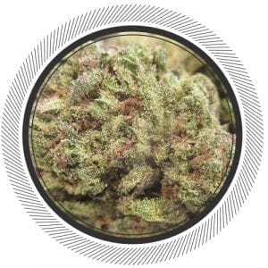 NWCannabisCo-Sour-Lemon -Haze-Super Lemon-Haze- Pineapple-Gold-WhitePalm-Cannabis