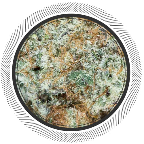 NYC Diesel, Marijuana