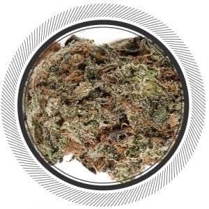 Cannabis-Marijuana-NWC-co-OG-Kush-01