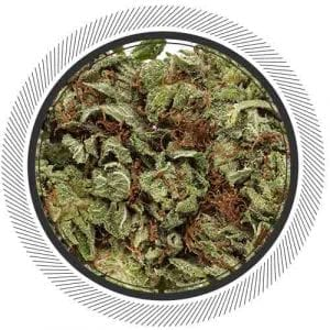 Cannabis-Marijuana-NWC-co-Rock-Star-01