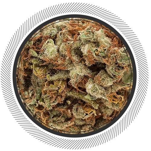Buy Jacky White strain online