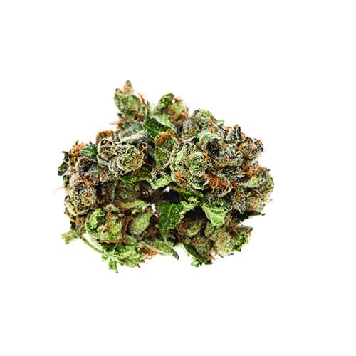Marijuana Pink Kush 02