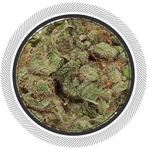 Cannabis-Marijuana-NWC-co-Holy-Grail-Kush-01
