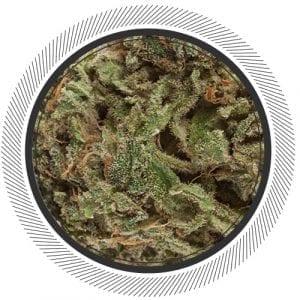 Cannabis-Marijuana-NWC-co-UK-Cheese--01