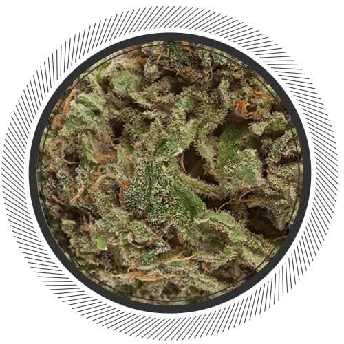 Cannabis-Marijuana-NWC-co-UK-Cheese–01