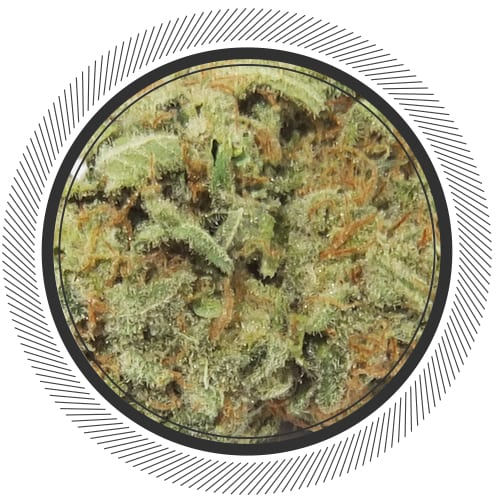 cannabis-marijuana-nwc-co-romulan