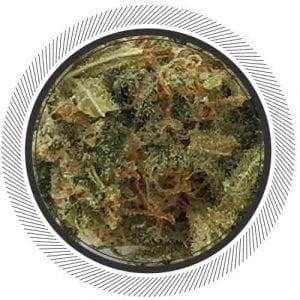 Romulan-WhitePalm-Mail-Order-Marijuana-Canada