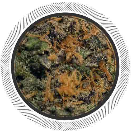 WhitePalm- Canada-Cannabis-Kootenay-Fresh-Blue-Sour-Indica-Sativa