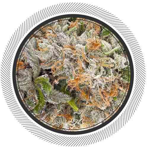 SouthCoast-Cannabis-WhitePalm-Canada-BubbaPink-Indica