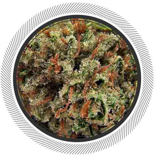 WhitePalm-NW-Cannabis-Death-Bubba