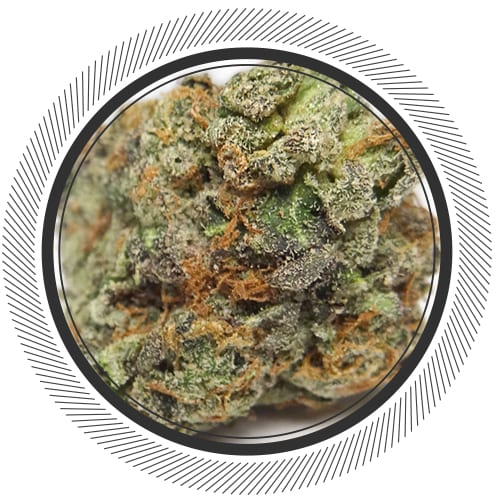 SouthCoast-Cannabis-WhitePalm-Canada-BubbaPink-Indica