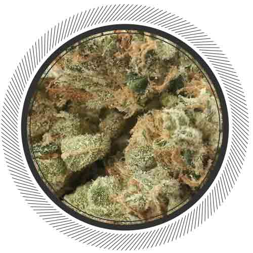 Deep_Purple-WhitePalm-Cannabis-Kootenay_Fresh-Canada-Mail_Order_Marijuana