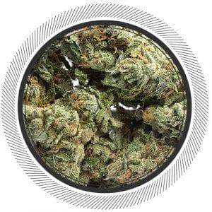 BlueberryAk-WhitePalm-Cannabis-Canada-1