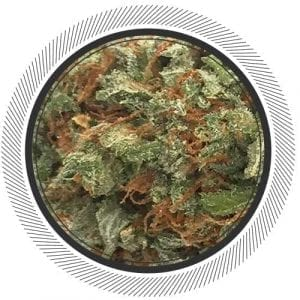 Buy Blue Dream online at Canada's best online dispensary