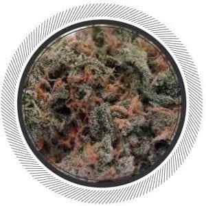 Blue Dream premium cannabis at WhitePalm