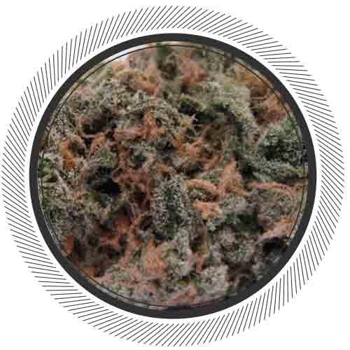 Blue-Dream-White-Palm-Online-Dispensary-Canada