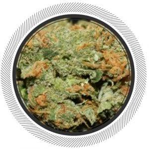 Lemon-Skunk-WhitePalm-Cannabis-Canada-Hybrid