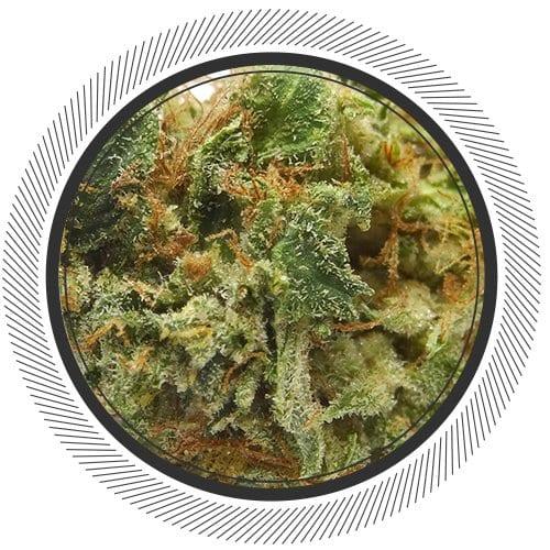 SkywalkerOG-WhitePalm-Cannabis-Online-Canada