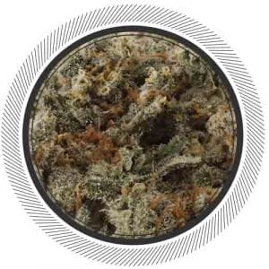 Trainwreck cannabis
