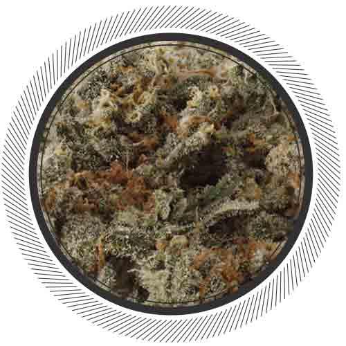 Trainwreck-WhitePalm-Cannabis-Online-Canada