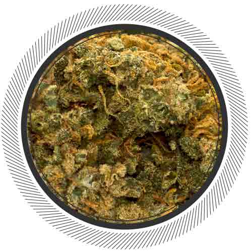 White Cheese makes you so damn hungry. Not only that, this stinky strain can make all of your pain go away.