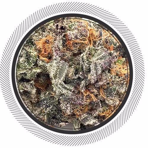 Exclusive to WhitePalm Blue Coma is a very rare euphoric cannabis Hybrid