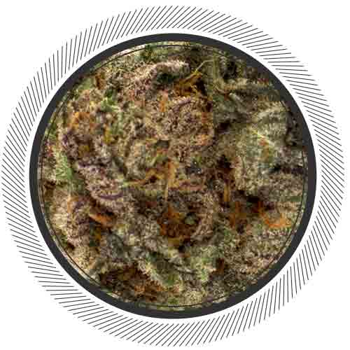 Blue Coma, one of the most rare and premium strains on the planet can be found at WhitePalm