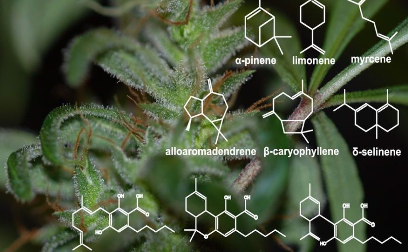 What the Heck are Terpenes!?