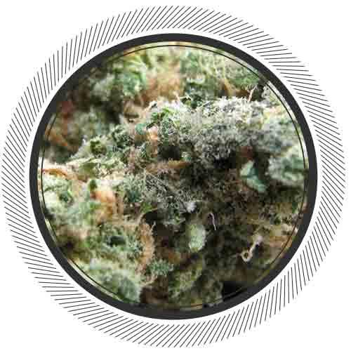 WhitePalm-Mail-Order-Marijuana-Blue-God-Indica
