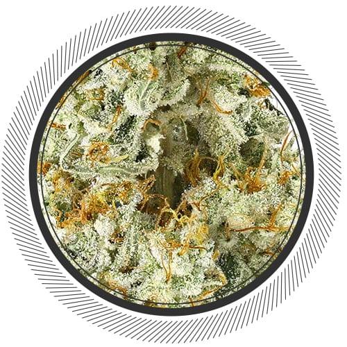 Gorilla-#4-WhitePalm-Mail-Order-Marijuana