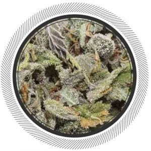 Strawberry Haze has the perfect sugary berry aroma and taste