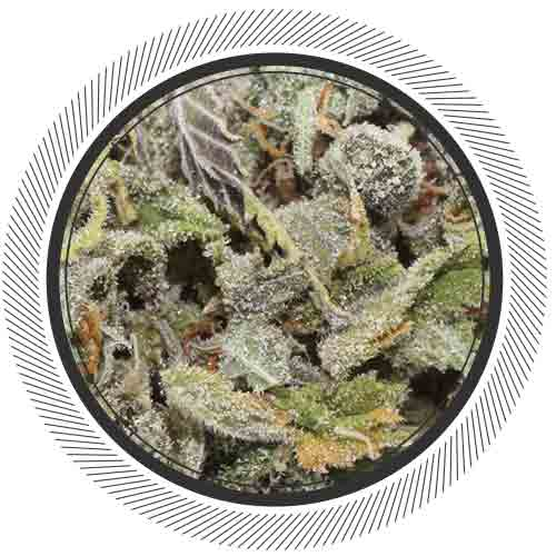 Strawberry Cheescake has the perfect sugary berry aroma and taste