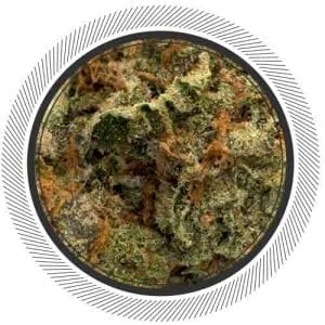 This White Coma is probably the most rare Sativa you will ever try