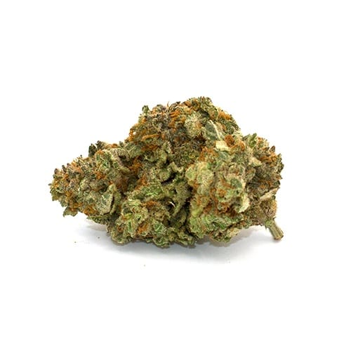 Pineapple Hybrid Exotic Cannabis
