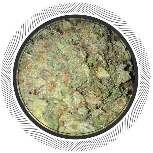 WhitePalm-Exotic-Cannabis-Pineapple-Hybrid