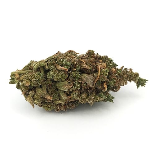 Lemon Lime is a cross between Oriental Express and Trainwreck. Oriental Express is a cross between East Coast Sour Diesel and Thai. This strain is rare.