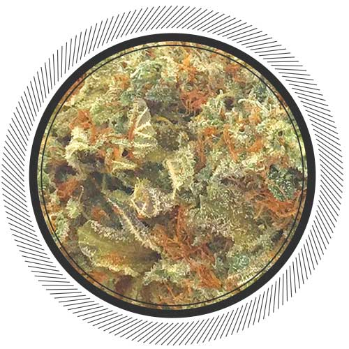 Buy God AK online today from Canada's no.1 online dispensary