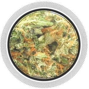 Buy the most rare strain known to mankind online, the Greasy Ghost Bubba