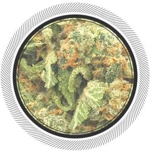 Buy NYC Diesel online today from Canada's no.1 online dispensary