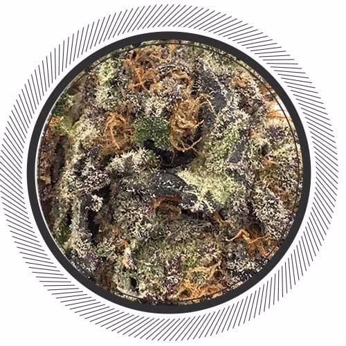 Order Purple Haze online