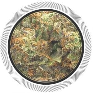Buy Purple Haze online from Canada's#1 online dispensary