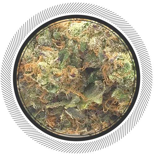 Buy Purple Haze online from Canada's#1 online dispensary | Order Weed Online