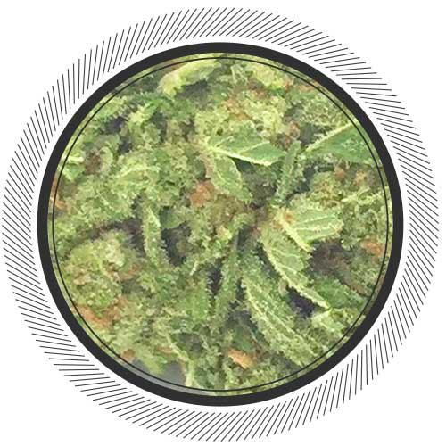 Watermelon-Indica-Kootenay-Fire-WhitePalm-Online-Dispensary-1