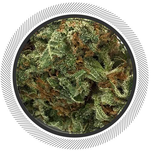 Buy weed online: Blueberry Sativa OG