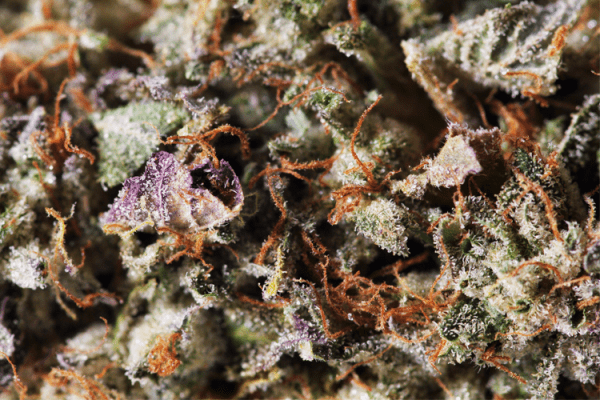 Ghost Bubba close up