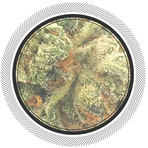 Buy small-batch Bruce Banner online