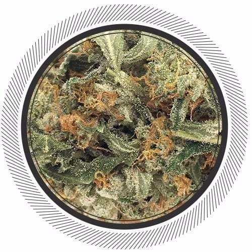 Order Bruce Banner weed deal online