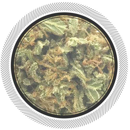 Organic greenhouse grown Land Cruiser strain available at WhitePalm, Canada's #1 online dispensary