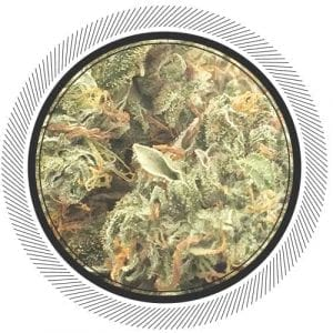 Buy craft organic weed at WhitePalm, newly added Organic Huckleberry